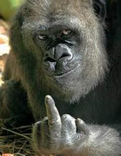 Gorila ii transmite ceva lui Sebastian Lazaroiu