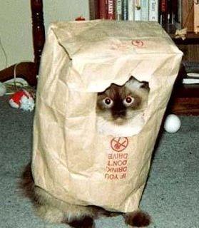 pisic sub acoperire sau membru al guvernului