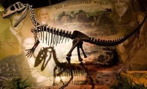 balaurul bondoc o noua specie de dinozaur descoperita pe teritoriul Romaniei